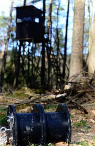 Kirrung im Wald