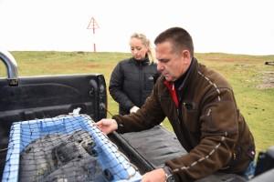 Die kleinen Heuler sind reisefertig - auf geht's zur Seehundstation Friedrichskoog
